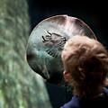 Child Watching Ray Fish by Arletta Cwalina