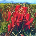 Chile Field by Candy Mayer