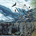 Chilkat River Eagles by Bob Patterson
