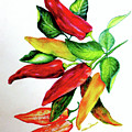 Chillies From My Garden by Karin  Dawn Kelshall- Best