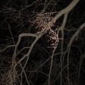 Chilling Night by Amanda Kessel