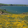 Chimney Rock Trail And Drakes Bay by Soli Deo Gloria Wilderness And Wildlife Photography