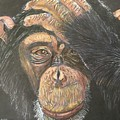 Chimp by Heike Althaus