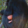 Chimpanzee by Donna Proctor