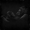 Chimpanzees, Mother And Baby by Maria Astedt