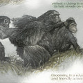 Chimps Sketch by Melvin Busch