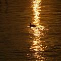 Chincoteague Bay Sunset by Kim