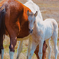 Chincoteague Mare And Foal by Pete Federico