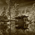 Chinese Botanical Garden In California With Koi Fish In Sepia Tone by Randall Nyhof