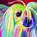 Chinese Crested - Fancy Pants by Alicia VanNoy Call
