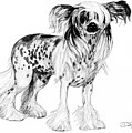 Chinese Crested Dog by Dan Pearce