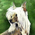 Chinese Crested by Kathleen Sepulveda
