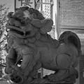 Chinese Guardian Female Lion B W by Teresa Mucha