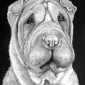 Chinese Sharpei by Portraits By NC