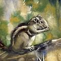 Chipmunk by Alfred Ng