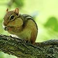 Chipmunk Cheeks by Debbie Oppermann