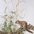 Chipmunk by Jean Pierre DeBernay