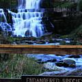 Chittenango Falls State Park by Merle Smith