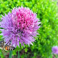 Chive And Bee by Wonju Hulse