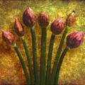 Chives Buds by Digital Crafts