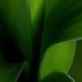 Chlorophylls Selectivity by Linda Shafer