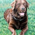 Choco Labrador by Nicole Zeug