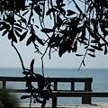 Choctaw Beach by Tammie J Jordan