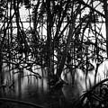 Chokoloskee Mangroves by Rich Leighton