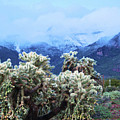 Cholla Cactus And Superstition Mountains by Richard Jenkins