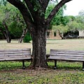 Choose Your Bench by Gary Richards
