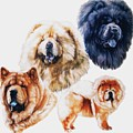 Chow Chow by Barbara Keith