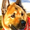 Chow Shepherd Mix by Marilyn Jacobson