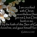 Christ Lives In Me by Larry Bishop