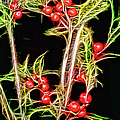 Christmas Berries by Ericamaxine Price
