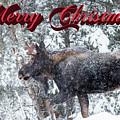 Christmas Bull Moose by Tami Biorn
