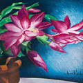 Christmas Cactus by Anne Rhodes
