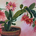 Christmas Cactus by Dianna Willman
