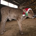 Christmas Calve Of Honor by Marty Saccone