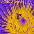 Christmas Card 2 by Jijo George