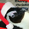 Christmas Card by Eric Pearson