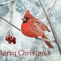 Christmas Cardinal by Angeles M Pomata
