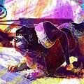 Christmas Dog Santa Hat Slide  by PixBreak Art