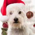 Christmas Elf Dog by Edward Fielding