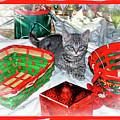 Christmas Kitten  by Geraldine Scull