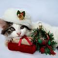 Christmas Kitten by Jai Johnson