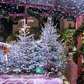 Christmas Market, Toulon by Jean Gill