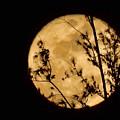 Christmas Moon by Pamela Walton
