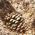 Christmas Pinecone On Barn Floor by Jorgo Photography - Wall Art Gallery