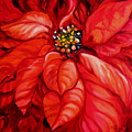 Christmas Poinsettia by Marcia Baldwin