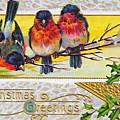Christmas Postcard by Kevin Bohner